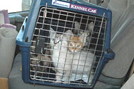 Kitties Transport